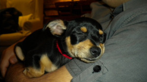 This is little Jimmy taking a nap. He is sooo cute.