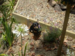 Little Jimmy resting in the garden